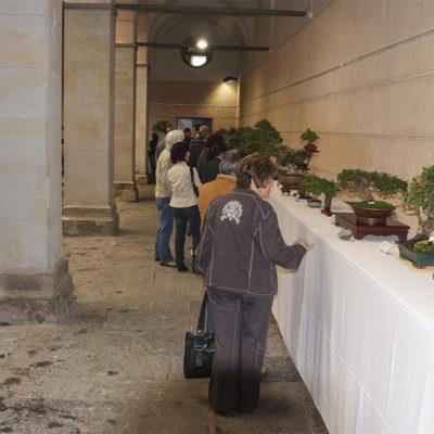 Mostra de bonsai i suiseki al pati de l'Hospici. ACGAX. Servei d'Imatges. Fons Ajuntament d'Olot. Autor desconegut, 2009.